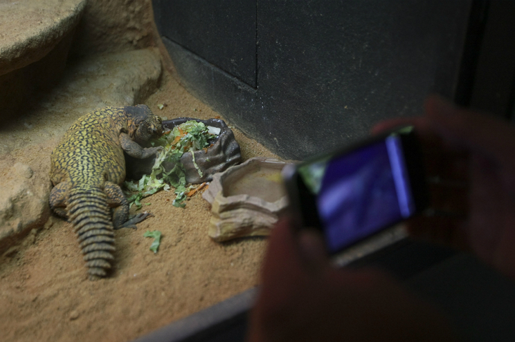 Zona dos répteis do Zoo da Maia
