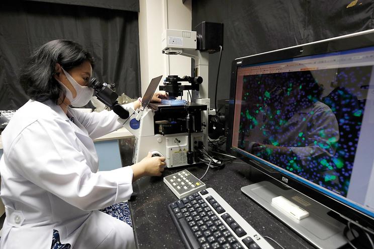 Há mais de 100 investigações em curso a nível mundial, incluindo na Tailândia, que já experimentou em