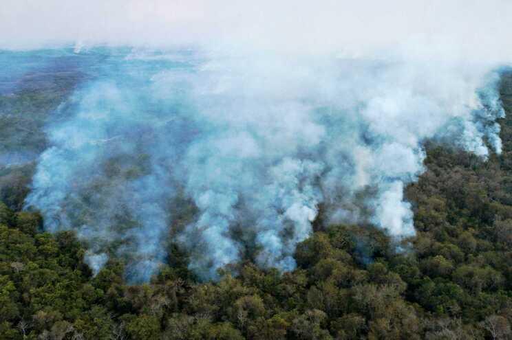 O Brasil é o país mais afetado pela desflorestação tropical