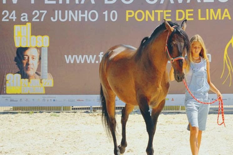 Vários cavalos presentes no certame de Ponte de Lima vão, depois, viahar para provas internacionais