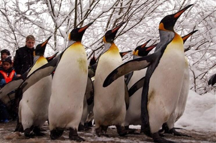 Albatrozes e pinguins em risco de extinção