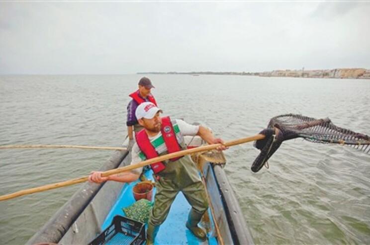 Na ria de Aveiro tem havido um crescimento exponencial de pescadores