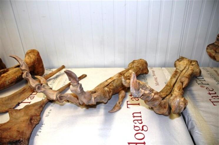 A Mongólia pediu a interdição da venda do esqueleto do dinossauro