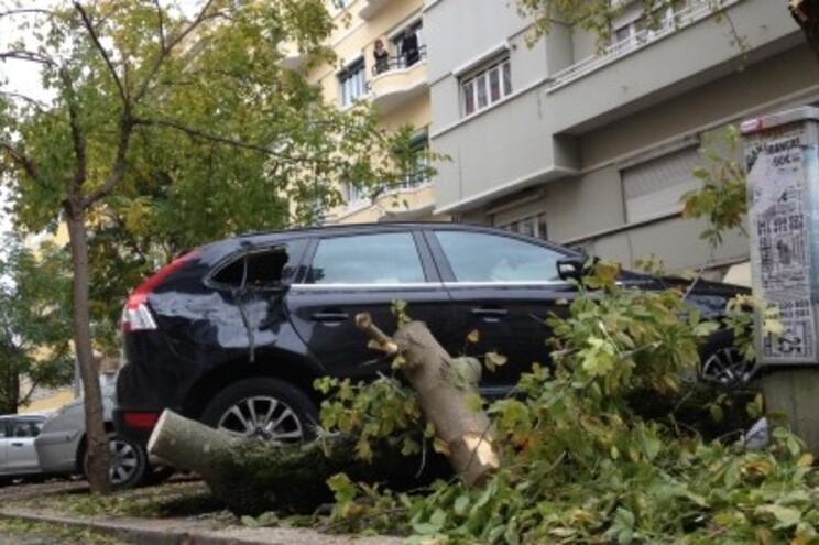 Carro atingido por queda de árvore na Rua Rodrigo da Fonseca