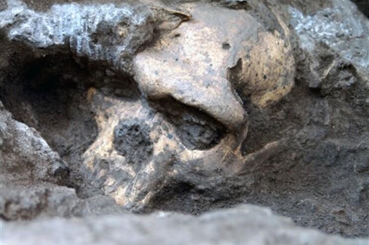 """O """"Crânio 5"""" pode revolucionar a história da evolução humana"""