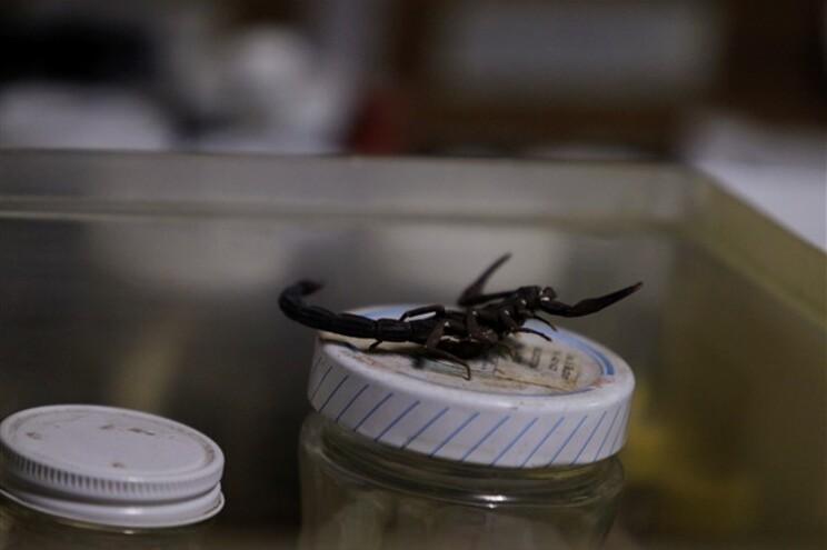 Escorpião acabou por ser morto pela tripulação
