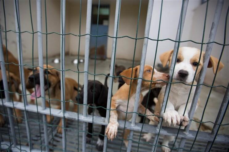 PAN defende fim de abates nos canis
