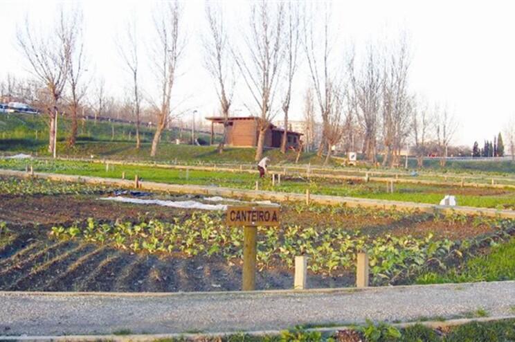 Horta pedagógica de Guimarães