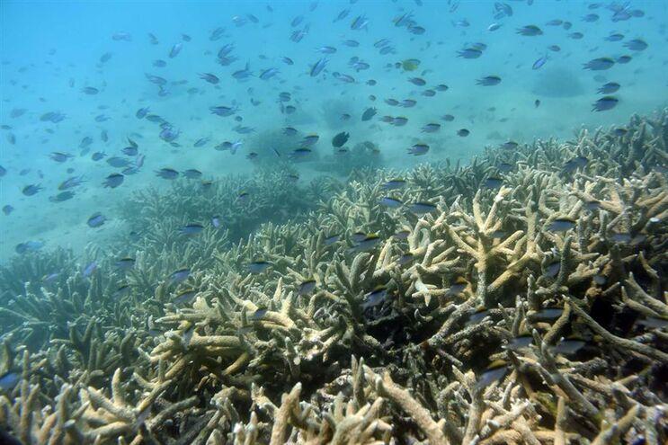 Vários estudos científicos publicados este ano alertaram sobre o mau estado dos corais da Grande Barreira