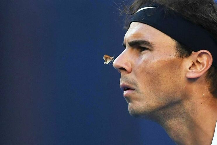 O momento em que uma borboleta pousou no nariz de Rafael Nadal, durante um jogo na Austrália