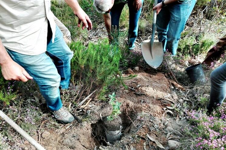 Primeira árvore humana plantada no Parque Natural de Sintra-Cascais
