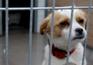 Cães abandonados aumentaram no último ano
