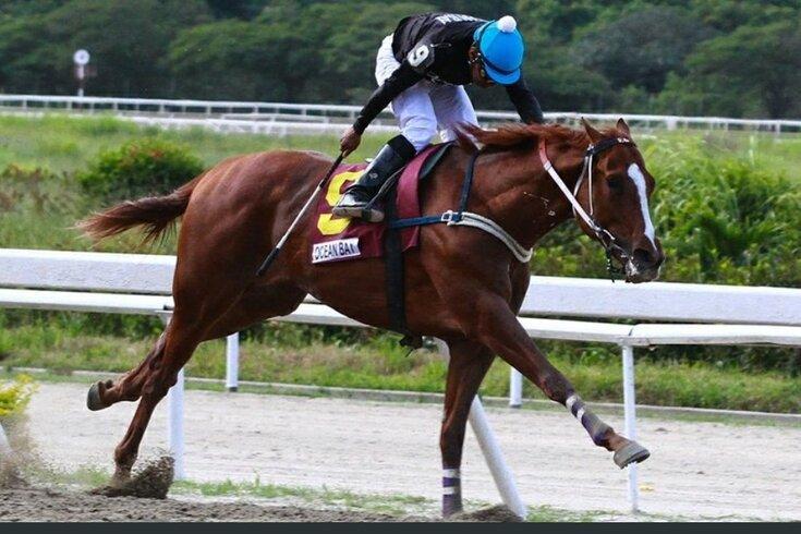 Roubam, matam e esquartejam cavalo octacampeão para comer na Venezuela