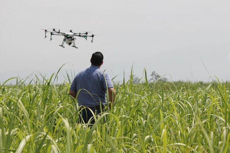 Drones e robôs autónomos vão proteger agricultura de espécies invasivas