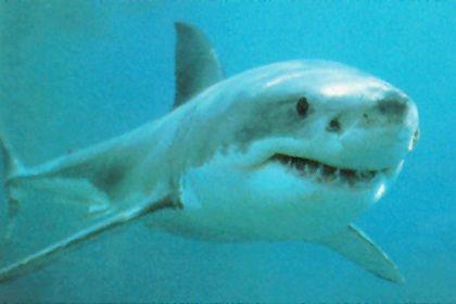 Mais ataques de tubarões em 2010