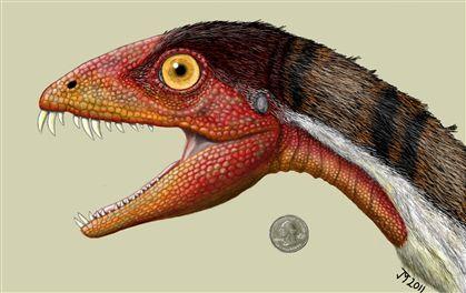 A reconstituição do dinossauro a partir do crânio