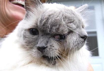 O gato com duas caras mais velho do mundo