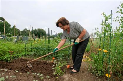 500 candidatos a aluguer de talhões de hortas urbanas