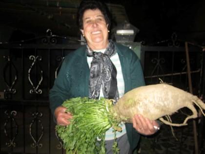Agricultora apanha nabo de seis quilos