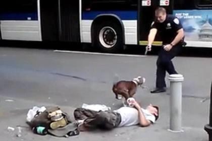 Polícia de Nova Iorque abate a tiro cão de sem-abrigo