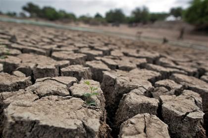 Brasileiros criam plantas resistentes à seca