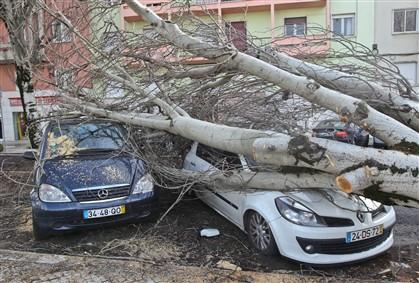 Queda de árvore provoca danos em carros