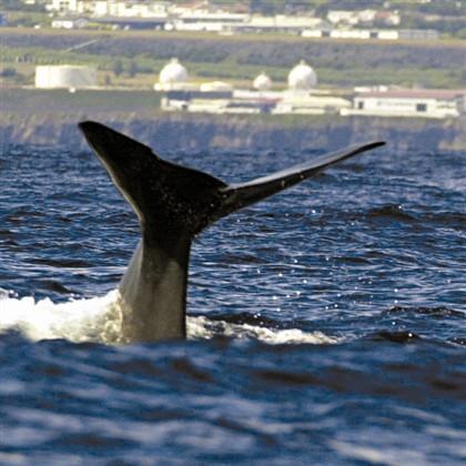 Especialistas estudam golfinhos e baleias