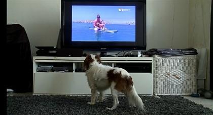 Especialistas acreditam que ver TV ajuda os cães a relaxar