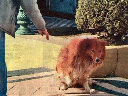 Morre cão que ficou 9 anos junto da sepultura do dono