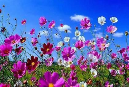 Primavera chega amanhã, em dia de verão e inverno