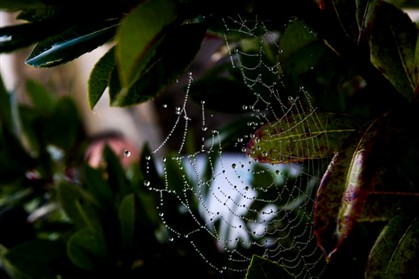 Cientistas querem produzir teia de aranha em laboratório