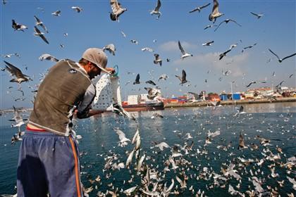 Os sinais de GPS enviados pelo barco de pesca já permitiram identificar cerca de 3 mil barcos em pesca ilegal.