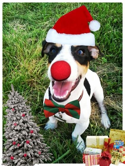 Natalisa-te 2.0. A aplicação que transforma fotografias em tesourinhos de Natal