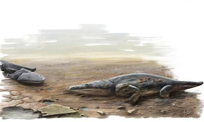A salamandra teria centenas de dentes e uma cabeça achatada, como se vê nesta representação artística.