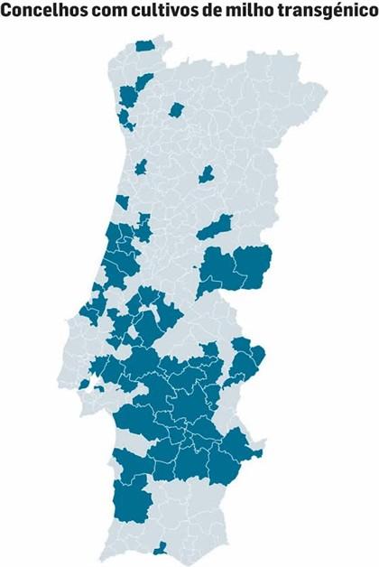 mapa de portugal 2014 Mapa mostra onde estão 8500 hectares de milho transgénico  mapa de portugal 2014