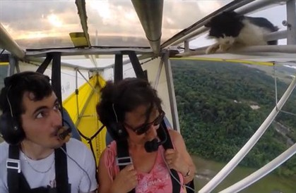 """Gato """"apanha boleia"""" na asa de ultra-leve e sobressalta piloto"""