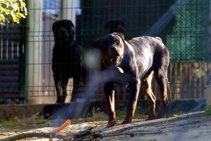 Maioria de ataques por cães não registados