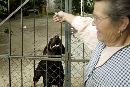 Criadores vão propor exame a cães de risco