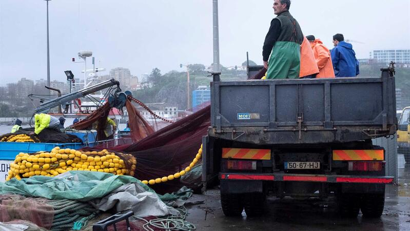 Bruxelas quer corte nas pescas de linguado, tamboril e pescada em 2021