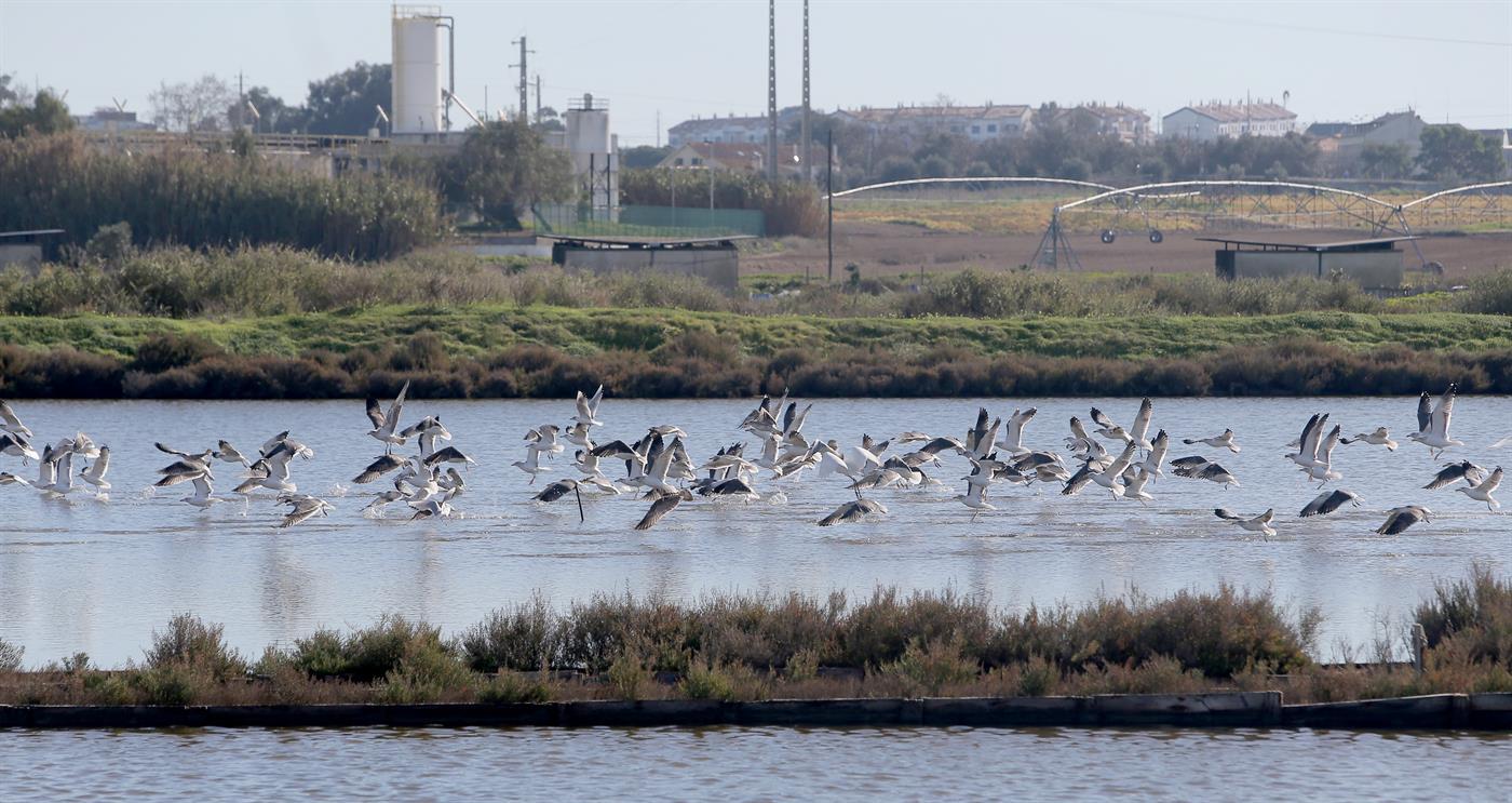 Investigadores da Science alertam sobre discrepância na construção do aeroporto de Montego