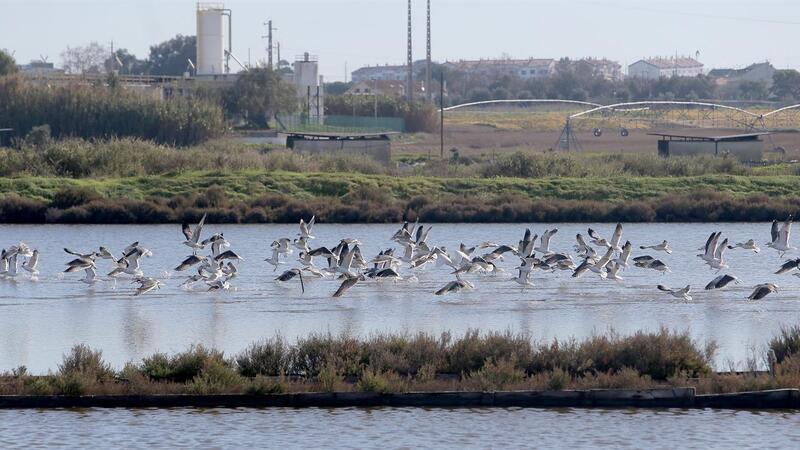 Salinas do Samouco, junto ao local onde será construído o novo aeroporto