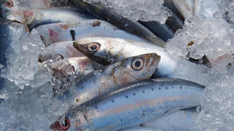 Ministros da União Europeia adotam plano B de pescas em águas britânicas